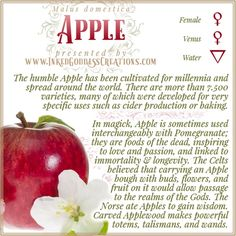 There is so much love lore surrounding Apples! Sharing this fruit with your loved one can ensure your relationship remains happy. Warm an Apple in your hands, then give it to your love. If they eat it, your love is reciprocated! // #apple #magick #kitchenwitch #greenwitch #love #immortality #wisdom #longevity #passion #underworld Wicca, Magick, Witchcraft, Practice Quotes, Alchemy Symbols, Baby Witch, Kitchen Witchery, Spiritual Path, Underworld