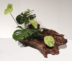 Easy To Grow Houseplants Clean the Air Art Loop Ikebana Exhibition Contemporary Flower Arrangements, White Flower Arrangements, Ikebana Flower Arrangement, Ikebana Arrangements, Dried Flowers, White Flowers, Beautiful Flowers, Exotic Flowers, Yellow Roses