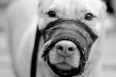 gobierno espacba abolicion perros potencialmente peligrosos zonas recreo para ellos