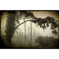 Spanish Moss Choose Photo or Set of Blank Photo Cards, Atmospheric,... ($4.12) ❤ liked on Polyvore featuring etsy