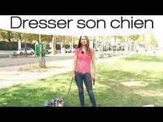 Comment tenir efficacement son chien en laisse - YouTube