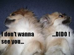 Funny upset dogs