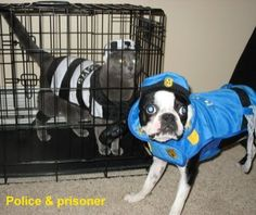 If you're gonna dress up your dog for Halloween, we suggest making the most of it with a super funny costume. There are funny dogs in an extremely funny costumes. Crazy Halloween Costumes, Funny Costumes, Pet Costumes, Dog Halloween, Costume Ideas, Woman Costumes, Pirate Costumes, Couple Costumes, Group Costumes