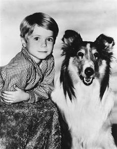 Lassie was a TV show back in the late 50's.  It really showed how this obient dog was so loyal to Timmy his owner and how much Timmy depended on Lassie for his survival.