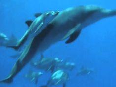 Life of the Ocean - Enya  Good Morning! Guten Morgen! Bonjour! Buongiorno! Buenos Dias! Günaydin! בקרטובصباحالخير早安おはようございますBomdia! SelamatPagi! Goeie morgen! kali̱méra! Hyvää huomenta! http://www.reiki-spiritualhealer-ernstkoch.blogspot.ch