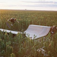 A group of skaters have built a half pipe surrounded by cannabis. Afends, an alternative fashion brand out of Byron Bay, headed to the largest hemp field in Australia to produce the clip. Skateboard Ramps, Skateboard Design, Skateboard Videos, Skate Ramp, Skate Surf, Bmx, Cannabis, Medical Marijuana, Backyard Skatepark