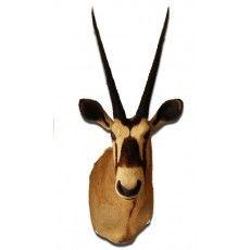Oryx Trophy