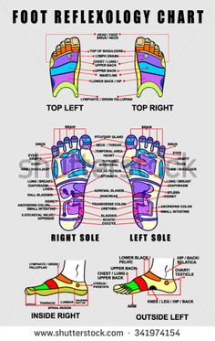 Find Foot Reflexology Chart Accurate Description Corresponding stock images in HD and millions of other royalty-free stock photos, illustrations and vectors in the Shutterstock collection. Thousands of new, high-quality pictures added every day. Family Tree Worksheet, Powerpoint Chart Templates, Foot Chart, Body Map, Eft Tapping, Foot Reflexology, Muscle Anatomy, Sports Massage, Lymphatic System