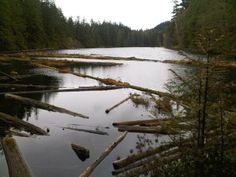 Lost Lake. North Puget Sound --  Larrabee State Park. Roundtrip 8.4 miles,  Elevation Gain 1300 ft,  Highest Point 1600 ft.  (Year round hike)