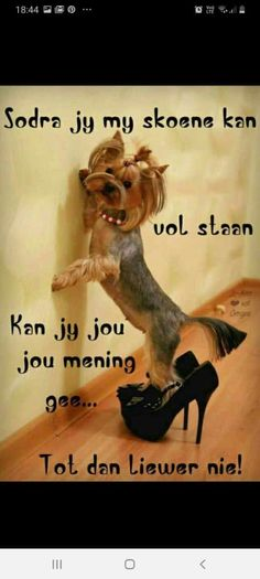 Afrikaans, Teddy Bear, Dogs, Yorkies, Movie Posters, Animals, Sayings, Animales, Animaux