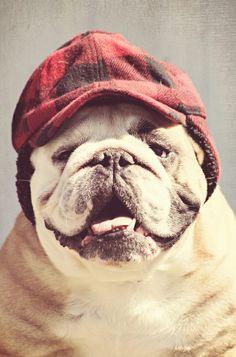 Baggy #Bulldogs
