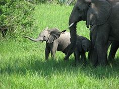 Elephants, Elephant, Family, Baby