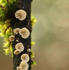 I'm having a fungi moment