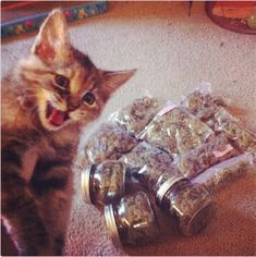 """""""Reefer madness.""""   37 Instagrams Of Cats Smoking Weed"""