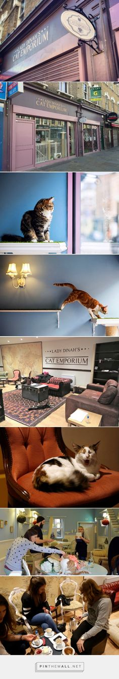 Lady Dinah's Cat Emporium in London - who doesn't love a cuddle with a kitty and a cuppa?