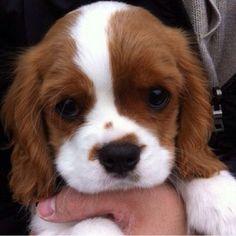 Dream puppy