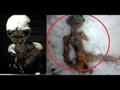 Image result for images of real aliens