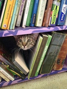 Meow...umm, hello. Can I help you find a book?  || Cat peeking out from lower book shelf :-)