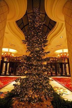 13 Best Our Silvertip Fir Christmas Trees Images Fir