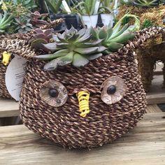 Succulent owl basket!! So adorable. #succulents #garden #PenfieldNY