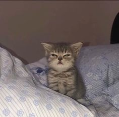 Cute Baby Cats, Cute Kittens, Cute Little Animals, Cute Funny Animals, Cats And Kittens, Funny Cats, Funny Animal Pictures, I Love Cats, Cool Cats