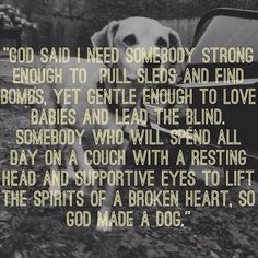 """""""The amazing attributes that ALL dogs fulfill..."""""""