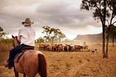 Mustering cattle in outback Queensland. Image by Matt Munro / Lonely Planet ©