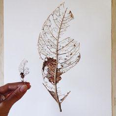 #arts_help #art_worldly #arts_gallery #watercolour #painting #watercolor #botanical #illustration @art_sanity @alien_arts @illustrateyourworld @sketch_daily @worldofartists @artfido @arts_help @art_spotlight @arts__gallery
