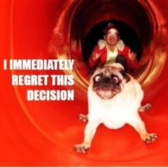 poor pug... i should not be laughing