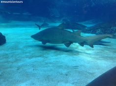 There is nothing more interesting than watching the sharks at the bottom of the ocean at uShaka Marine World. Bottom Of The Ocean, Sharks, More Fun, Fighter Jets, Travel Tips, Africa, Tours, World, Shark
