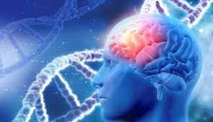 Could this computer game delay Alzheimer's symptoms? New study suggests it could. medical background with male head with brain and DNA strands Stress Disorders, Bipolar Disorder, Lesión Cerebral, Cerebral Cortex, Conscience Collective, Health And Fitness, Alzheimer's Symptoms, Cannabis Plant, Body Fitness
