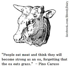 """""""people eat meat and think they will become strong as an ox, forgetting that the ox eats grass."""" -Pino Caruso"""