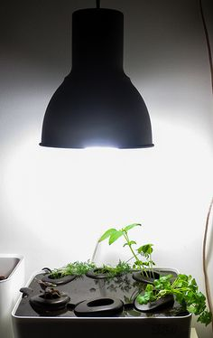 (Day Some new growth. Installed Ikea lamp with esl. Ikea Lamp, New Growth, Hydroponics, Garden Projects, Esl, Sweet, Plants, Home Decor, Candy