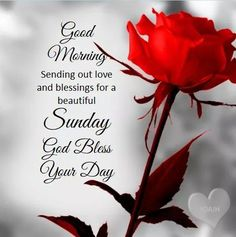 Everybody keeps searching for good morning images with beautiful flowers wish their friends good morning. In today's post, we have brought you a great collection of good morning images with beautiful flowers. Blessed Sunday Morning, Blessed Sunday Quotes, Sunday Morning Quotes, Sunday Wishes, Good Morning Prayer, Morning Greetings Quotes, Morning Blessings, Good Morning Love, Good Morning Messages