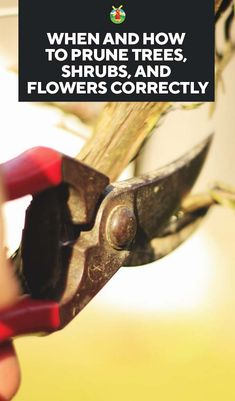 When and How to Prune Trees, Shrubs, and Flowers Correctly