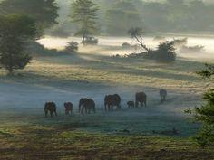 olifanten in de nevel