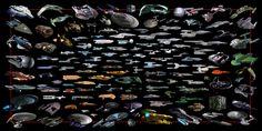 Star Trek Ships Classes