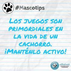 #Mascotips Los juegos son primordiales en la... - Hospital Veterinario Oftalvet