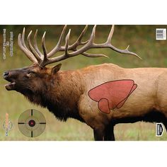 Birchwood Casey Pregame Targets Elk x (Per 35404 Quail Hunting, Deer Hunting Tips, Pheasant Hunting, Elk Hunting, Hunting Rifles, Turkey Hunting, Archery Hunting, Hunting Stuff, 3d Archery