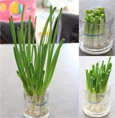 grow your own green onions - Vegetable Garden, Garden Plants, Indoor Plants, My Secret Garden, Plantation, Green Life, Agriculture, Bonsai, Greenery