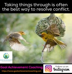 Goal Achievement Coaching seeks to build a global community of individuals and teams pursuing the achievement of their personal life and team goals. Coach Instagram, Remain Calm, Achieving Goals, Ottawa, Quebec, Ontario, Toronto, Nest, Nature Photography
