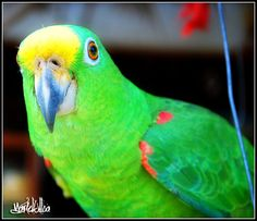 aves nativas colombianas - Google Search