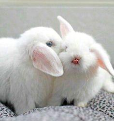Netherland Dwarf Rabbit _ the smallest rabbit in the world - Gloria Love Pets Cute Baby Bunnies, Funny Bunnies, Cute Babies, Snow Bunnies, Fluffy Bunny, Animal Pictures, Cute Pictures, Dwarf Rabbit, Tier Fotos