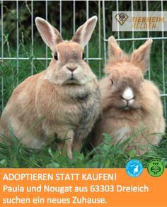 Zwei Ninchen auf der Suche nach lieben Menschen  http://www.tierheimhelden.de/kleintier/tierheim-dreieich/loewenkoepfchen/paula_u_nougat/4534-2/  Das Löwenköpfchen Nougat (männlich,kastriert) und Paula, ein Farbenzwerg (weiblich), sind zwar nicht streichelsüchtig, insbesondere im Austausch gegen Essen lassen die beiden sich anfassen und streicheln. Beide sind gegen Myxomatose und RHD geimpft.
