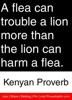 A flea can trouble a lion more than the lion can harm a flea. - Kenyan Proverb #proverbs #quotes