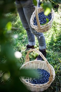 baskets of blueberries