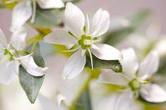 Powerful Medicinal Herbs & Plants for Women Medicinal Herbs, Beautiful Gardens, Gardening Tips, Herbalism, Medicine, Healing, African, Sustainability, Floral