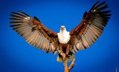 #WLRFeaturedPic August week 3 feature by JR Brentnall: #africa #safari #southafrica #birders
