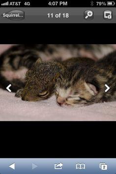 Daisy and kittens