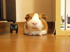 I'm full... by yasu0710, via Flickr